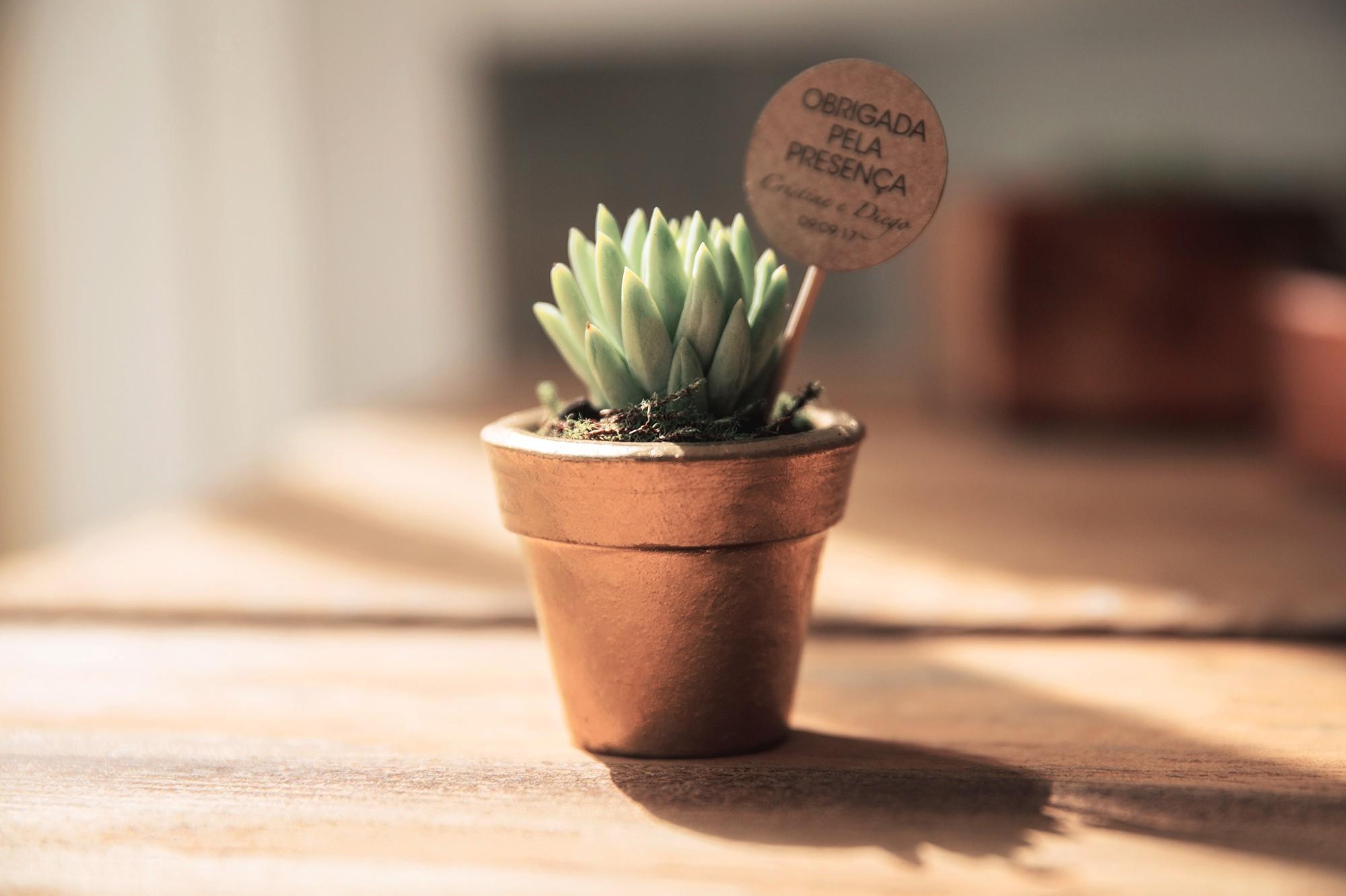 Vasinho de suculenta para decoração rústica.